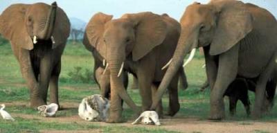 Algo me diz que nosso contato com os elefantes está próximo